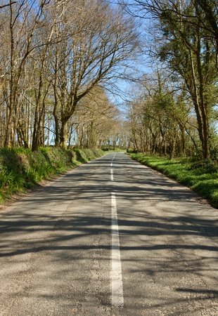 grass verge: An English country road through trees, the B3315 in Cornwall. Stock Photo
