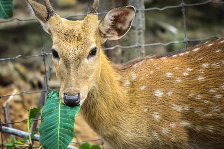 wilds: Deer