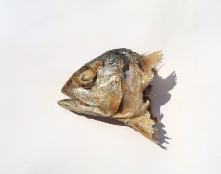 fish: Mackerel fish head