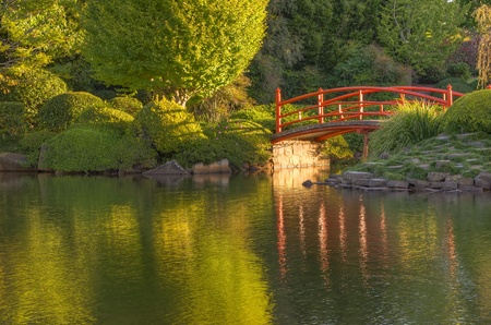 A tranquil bridge in the Japanese gardens at USQ Toowoomba photo