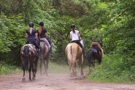 Groep mensen rijden paarden in het bos Stockfoto - 80450261