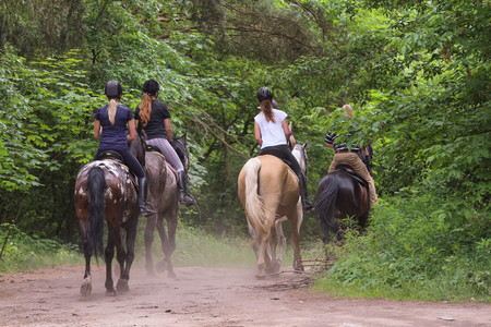 Group of people riding horses in the forest