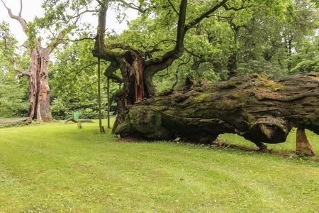 wielkopolska: Lech, Czech and Rus - ancient oaks in Rogalin Landscape Park Stock Photo