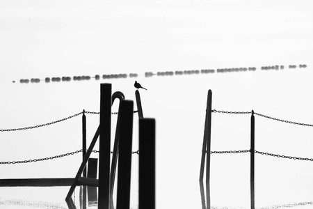 Abstract black and white composition with a bird sitting on a lake pier railing Reklamní fotografie