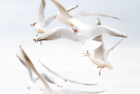 a flock of seagulls flying over the sea shore