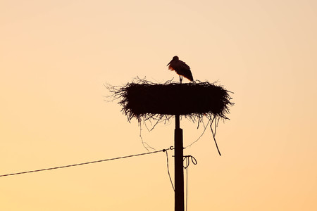 Silhouette of a stork standing in the nest with a sunset sky background Reklamní fotografie