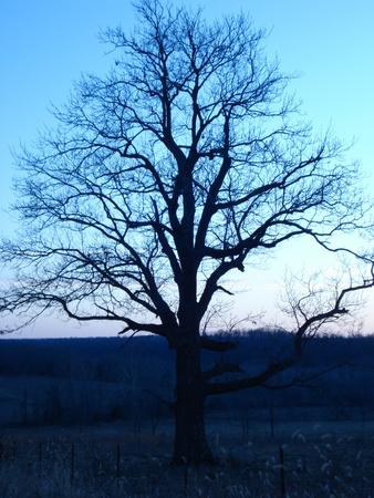 Twilight Tree in the countryside in the winter