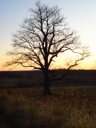 Sunset Tree in the countryside int the winter