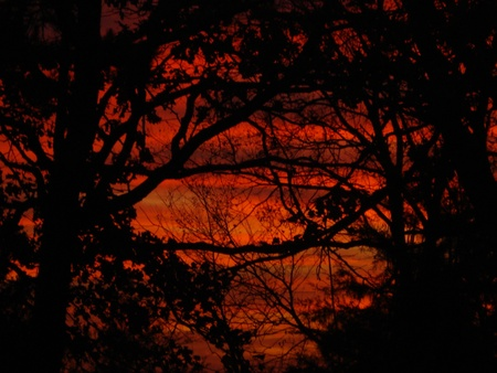 Red Sunset Through the Trees
