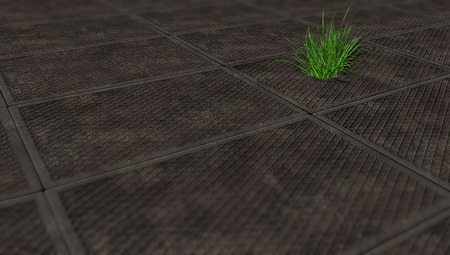 sprouted: grass sprouted through the gray plate, area, paved with slabs