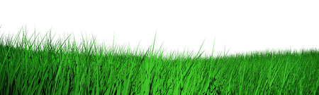 grass isolated: fresh spring green grass isolated on white background Stock Photo