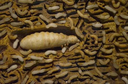 molehill: Termite in molehill Stock Photo