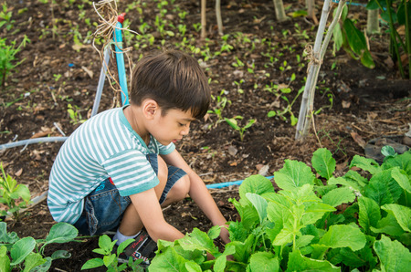 family gardening: Little boy working planting in the farm outdoor