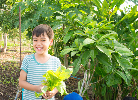 asian gardening: Little boy working planting in the farm outdoor