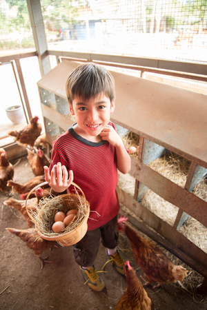 Little boy picking chicken egg in the farm