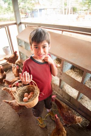 Little boy picking chicken egg in the farm