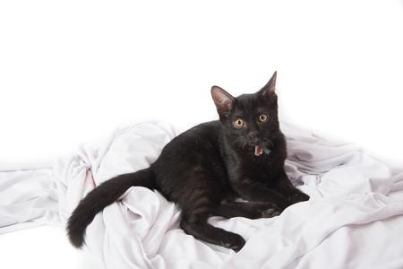 Close up schwarz kittle Katze auf weißem Hintergrund Standard-Bild - 80995684