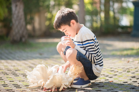 Little boy feeding food to the chick Imagens