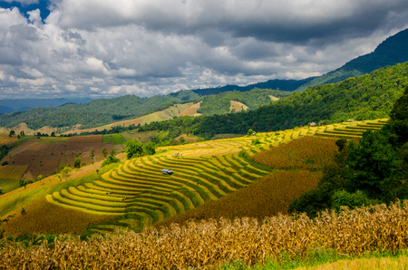 terraced field: Pa Pong Piang Rice terraces, Mae Cham, Chiang Mai, Thailand.