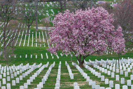 美国华盛顿阿灵顿国家公墓,美丽的樱花和墓碑