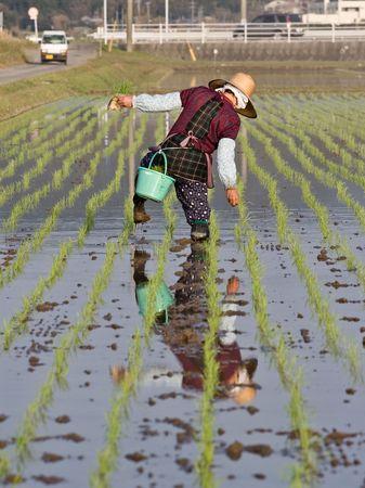 Old woman walking in wet rice field in Japan Stock Photo