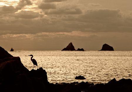 seabird: Seabird on a rock next to the ocean