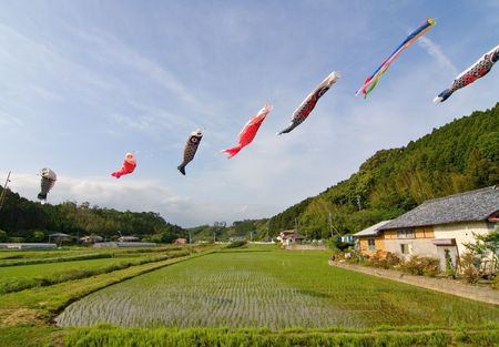 Japanese koi-nobori wind socks blowing in the wind above a rice field
