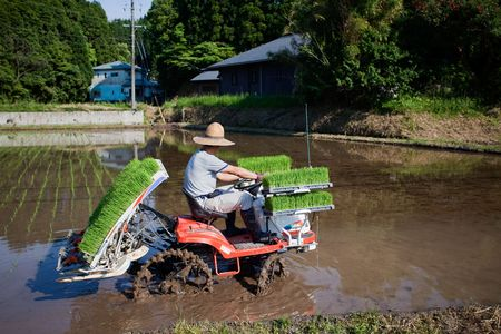 Kagoshima, Japan, June 3, 2010. A Japanese rice farmer riding a tractor plants a flooded rice field with new rice shoots   Editorial
