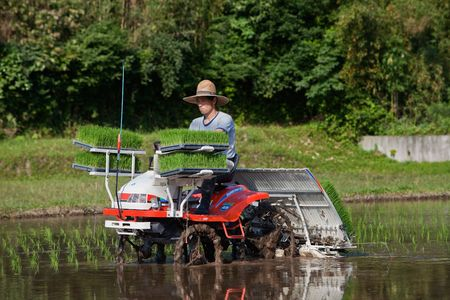 Kagoshima, Japan, June 3, 2010. A Japanese rice farmer riding a tractor plants a flooded rice field with new rice shoots