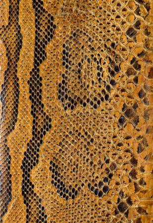 reptiles: Snake skin background texture Stock Photo