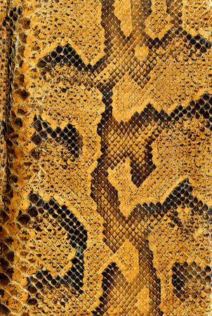 Snake skin background texture Stock Photo
