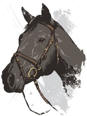 Hand drawn vector illustration of a wild horse all parts are editable view my full portfolio for similar images