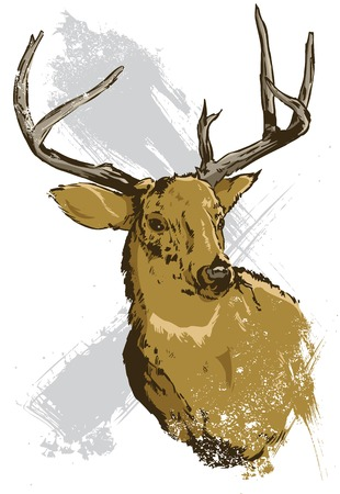 Hand drawn vector illustration of a wild deer all parts are editable view my full portfolio for similar images