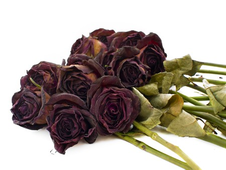 dried flower arrangement: Old dried red roses isolated against a white background