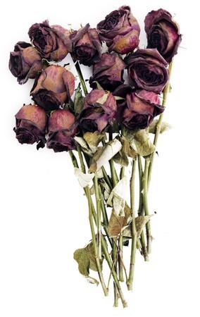 flores secas: Antiguo secos de rosas rojas aisladas sobre un fondo blanco