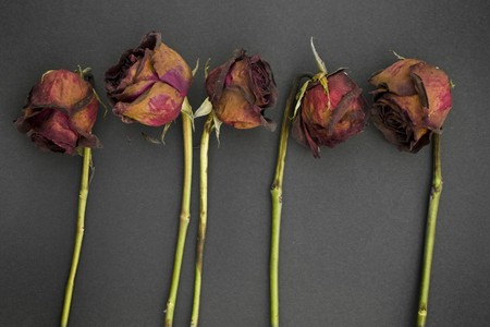 stalk flowers: Row of 5 old dried red roses against a dark background