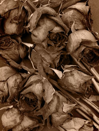 dried orange: Vintage style old dried roses against a dark background