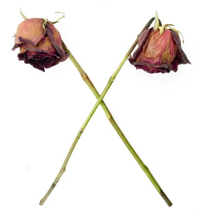 Old dried roses in a cross symbol against a white background photo