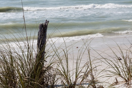 sea oats: Surf comes in on the beach at Cayo Costa, Florida