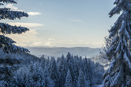 dream land: Morning shot of the Beskid Sadecki Mountains