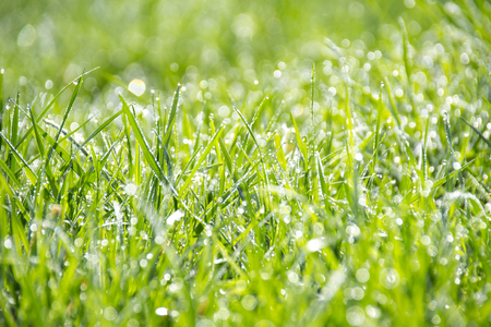 absolutely: Absolutely wonderful dew drops on the grass