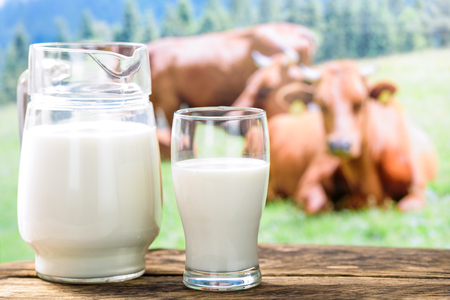 Fresh milk in the glass on a background of pasture with cows