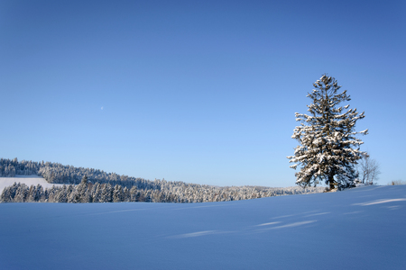 Picturesque winter landscape - lonely tree on a background of mountains and blue sky in the morning on a sunny day (with copy  space). Stock Photo