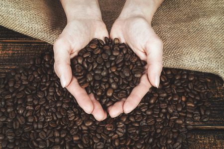 Coffee production concept - woman is holding fresh roasted beans in her hands over a wooden desk and a burlap sack (vintage effect).  Stock Photo