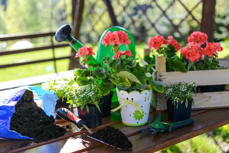 Concept of garden work - planting flowers in a garden gazebo on a sunny morning.