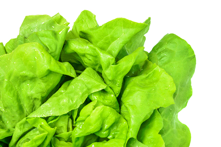Top view of a fresh and green lettuce with water drops on a white background in close-up (high details). Stock Photo