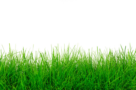 Natural green grass meadow isolated on a white background in close-up with copy space ( high details) Stock Photo