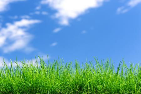 Idyllic nature landscape - field of fresh green grass on a blue sky background ( copy space)