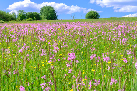 Idyllic rural landscape - flowering meadow on a sunny day on a background of blue sky and clouds Stock Photo