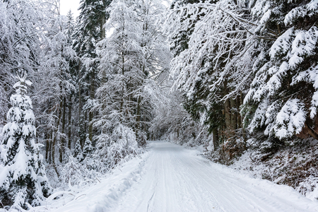 Winter landscape - white and snowy road among trees in a deep forest